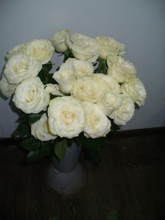 Белая эквадорская роза мондиаль