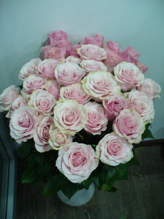 Эквадорская роза пинк-мондиаль