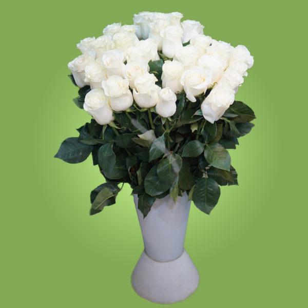 Белая эквадорская роза