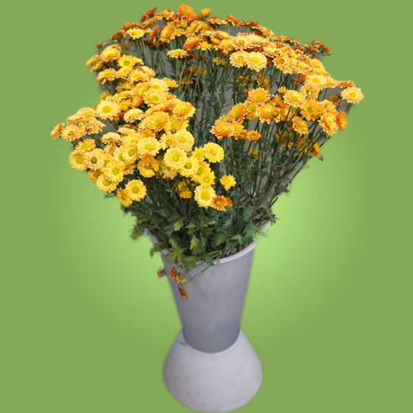 Цветы жёлтые