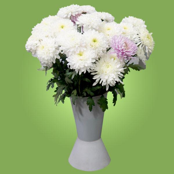 Хризантемы-шарики