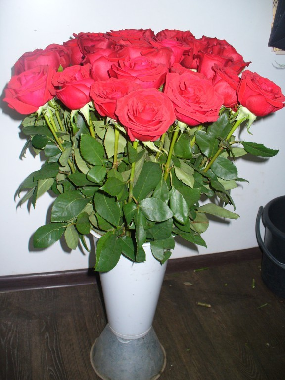Эквадорская роза фридум