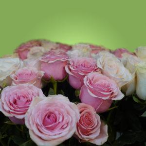 Розовые эквадорские розы