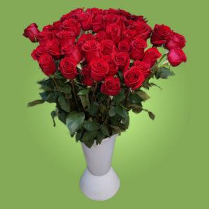 Красная роза Эквадорская