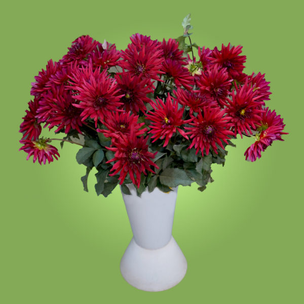 Красные цветы - букет